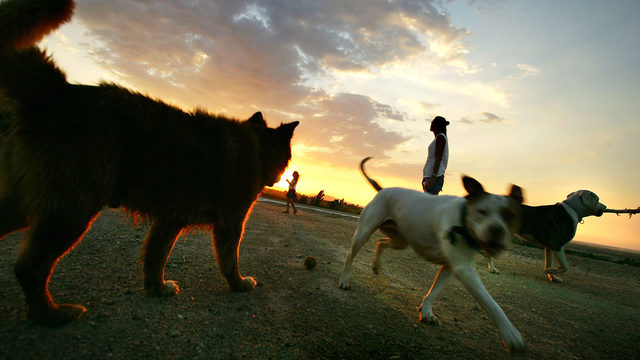 Dogs, puppy, park, California aqueduct, people, generic_7641348_ver1.0_640_360
